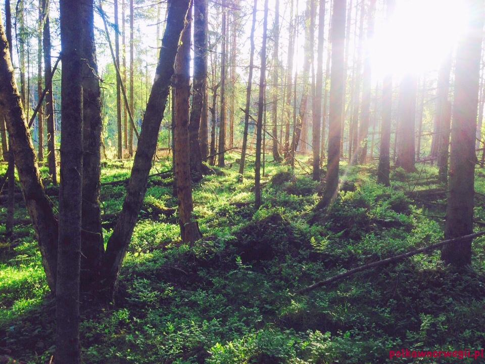 leśna ścieżka spacerowa wokół Lindeberg