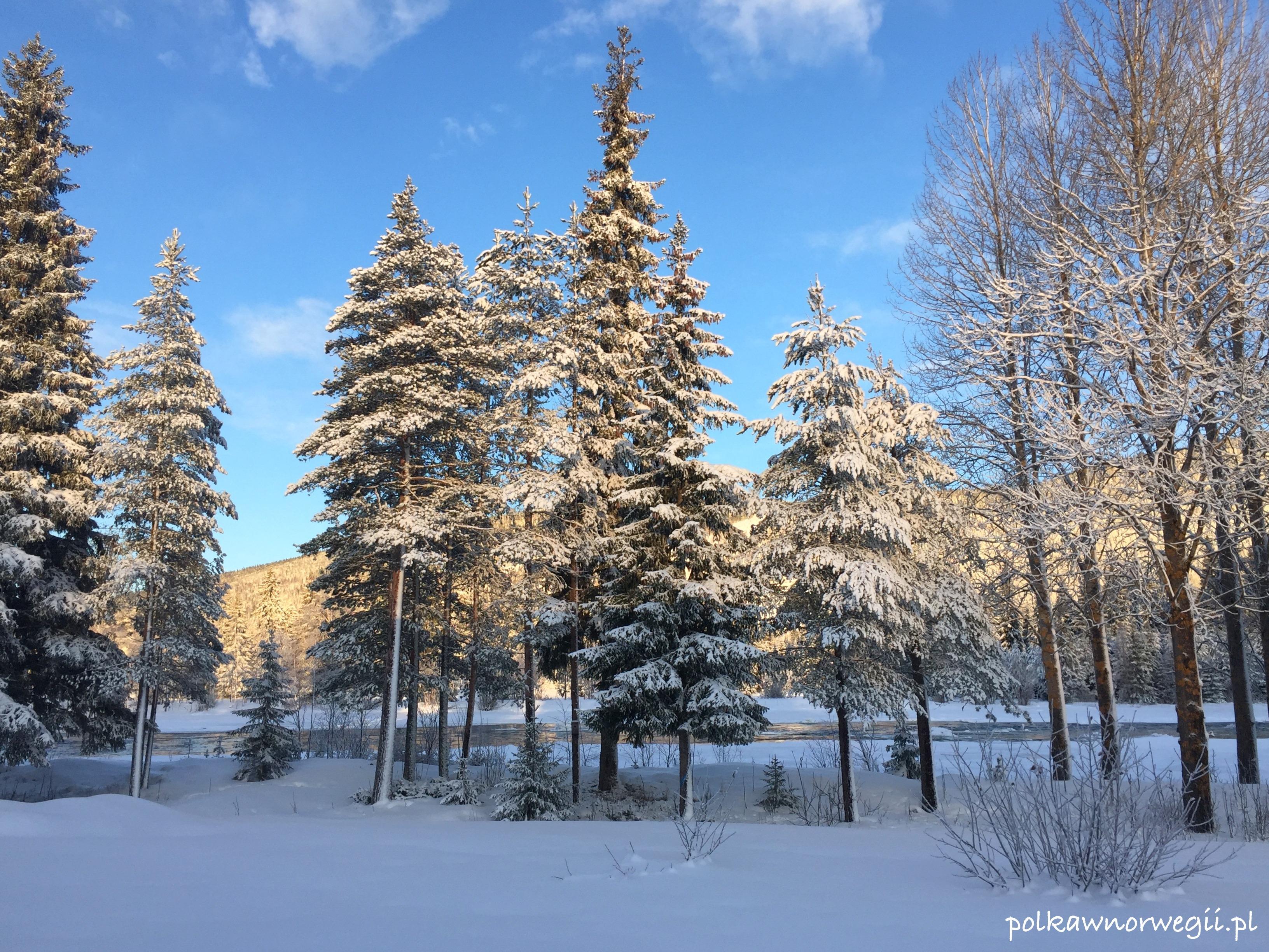 Trysil - tu na brak śniegu nie narzekają