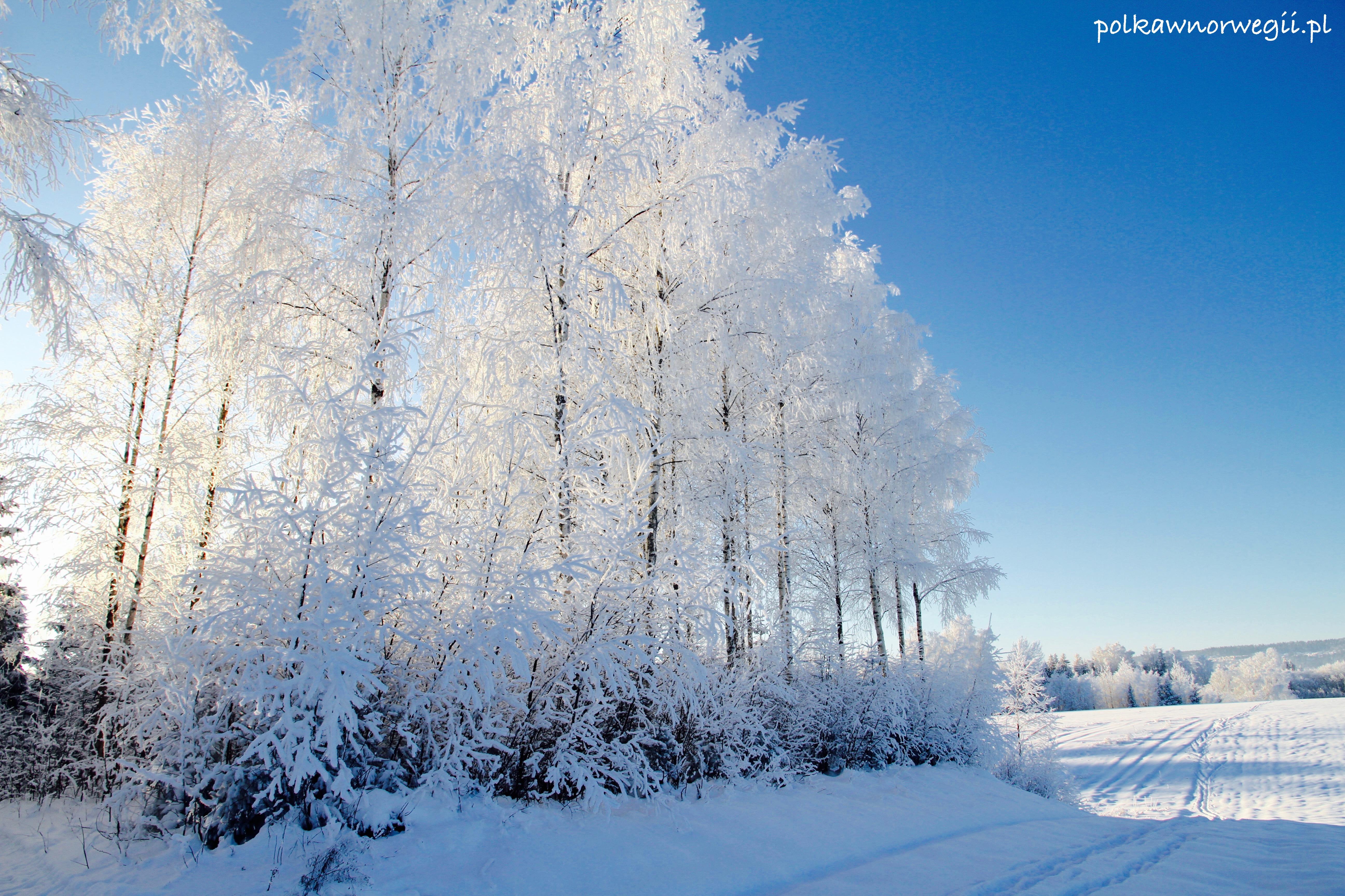 Zima 2016 - mimo, że łagodniejsza niż poprzednie dla mnie była imponująca...